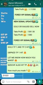 daily forex signals