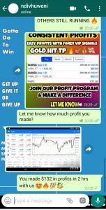 best forex signal provider by forex vip signals