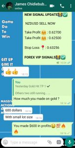 day trading forex live by forex vip signals